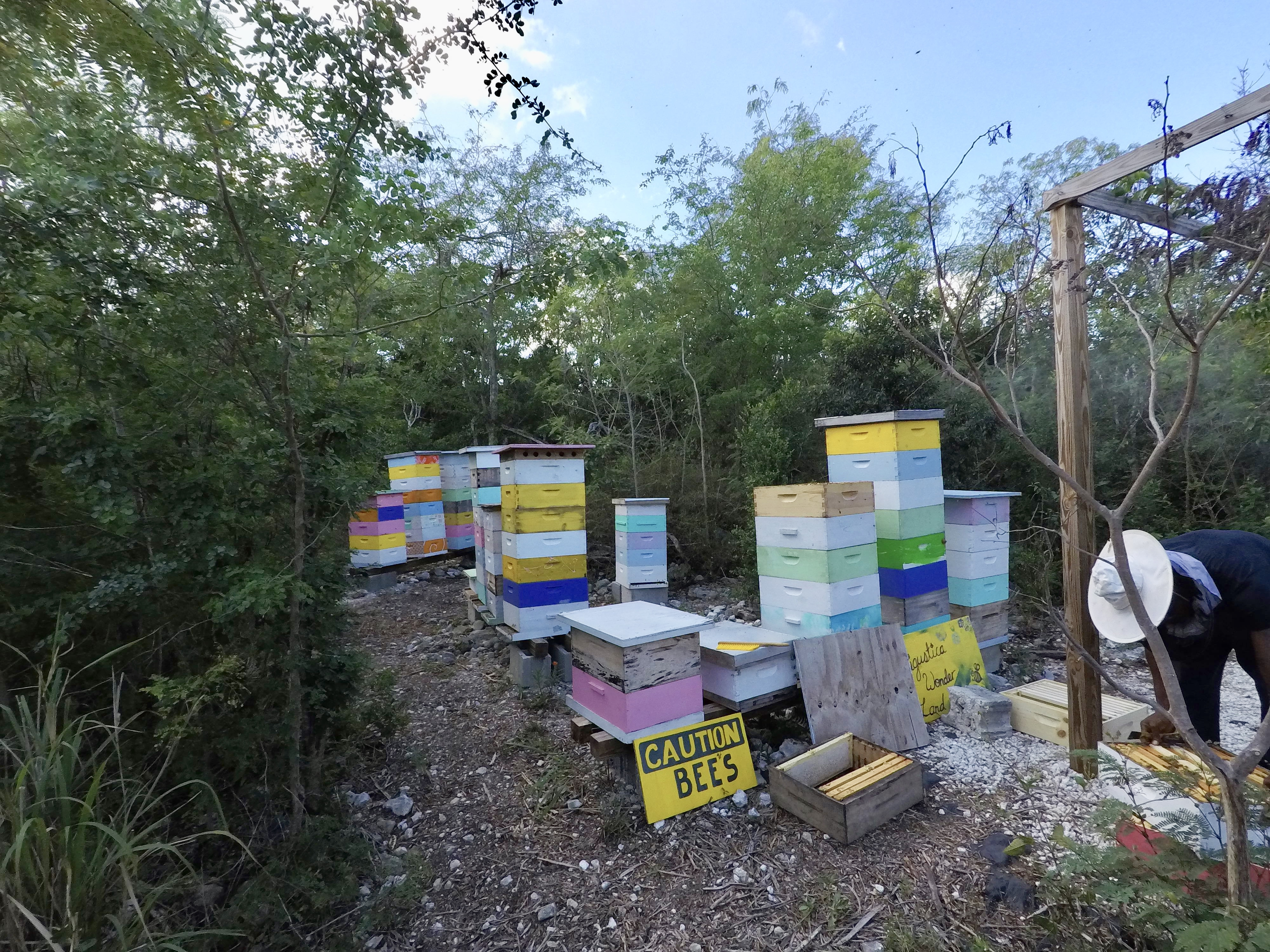 beehives in Exuma