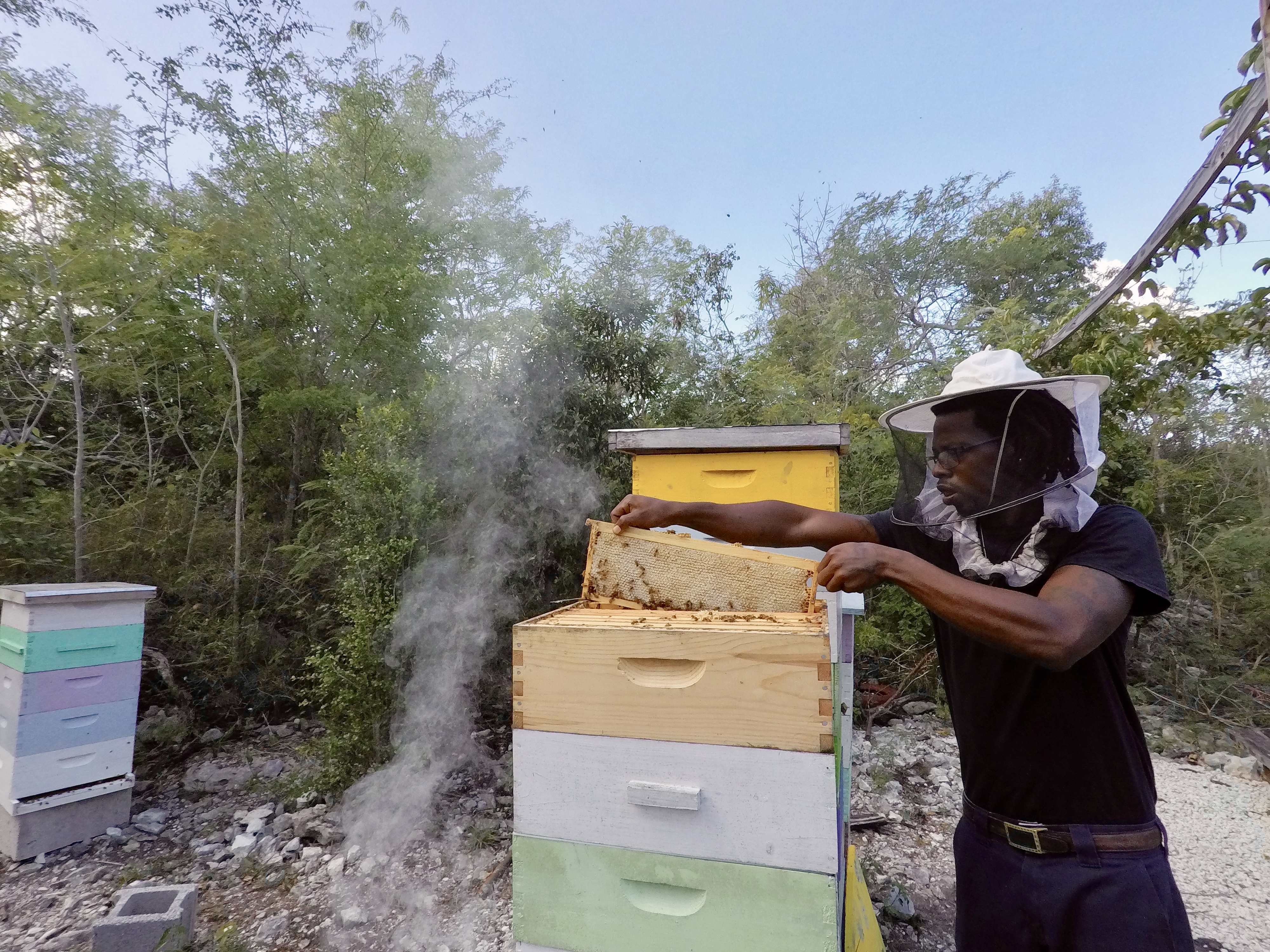 extracting the panel from the hive